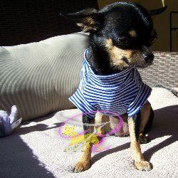 Artikel Nr-H70T95B-1__xxs,-welpenpullover-welpenpulli-welpen-pullover-(-chiwawa,-yorkie,-usw.)-in-der-farbe-blau-mit-weissen-streifen-100%-baumwolle.-welpen-pullover-chiwawa-yorkie-usw-100-baumwolle