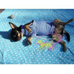 Artikel Nr-H70T95B-2__xxs,-welpenpullover-welpenpulli-welpen-pullover-(-chiwawa,-yorkie,-usw.)-in-der-farbe-blau-mit-weissen-streifen-100%-baumwolle.-welpen-pullover-chiwawa-yorkie-usw-100-baumwolle