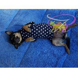 Artikel Nr-H71T02B-1__xxs,-welpenpullover-welpenpulli-welpen-pullover-in-der-farbe-blau-mit-weissen-sternen-100%-baumwolle.-welpen-pullover-100-baumwolle
