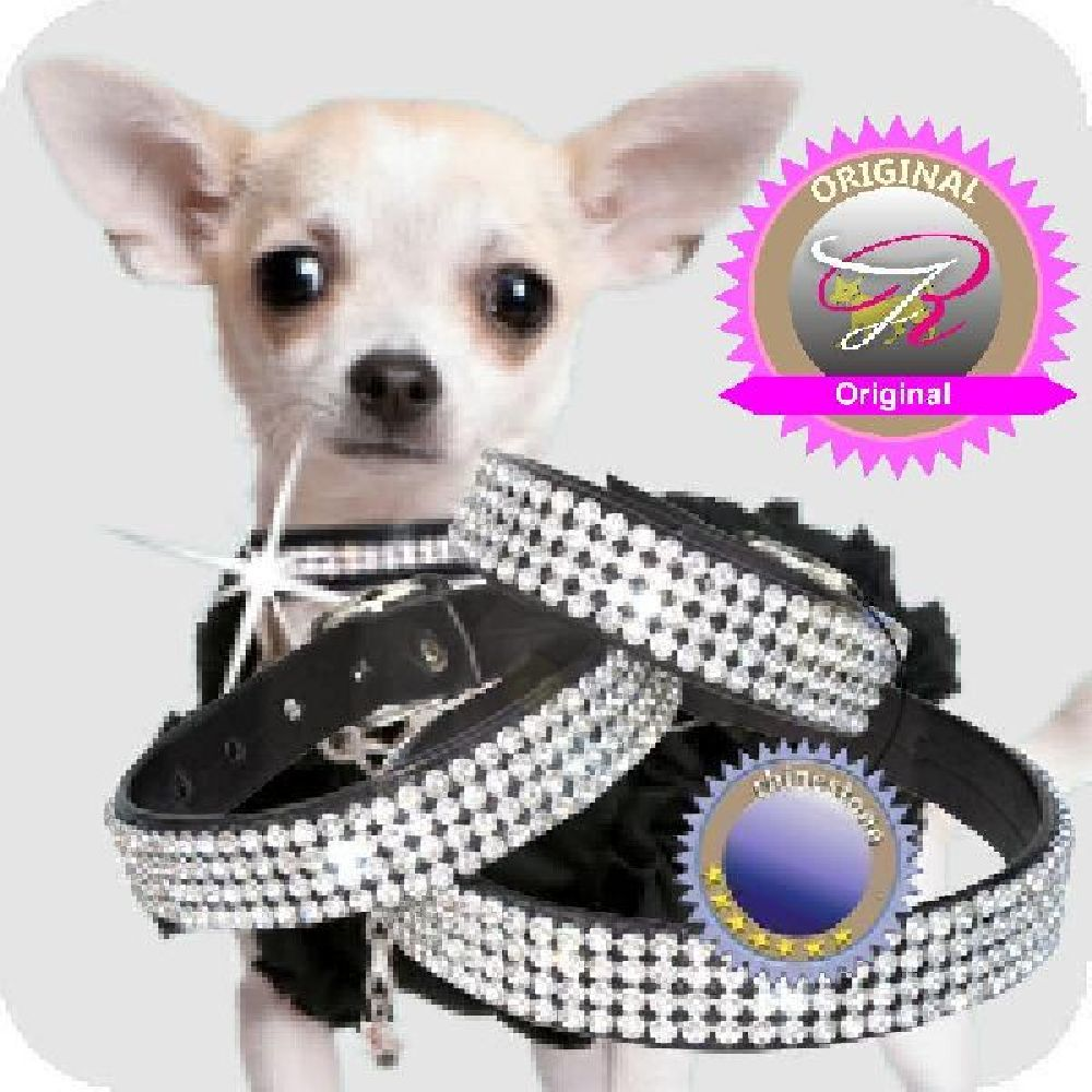 Artikel Nr-H74T02B-0__xs-hundehalsband-chihuahua-schwarz-mit-strass
