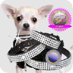 strasshalsband_chihuahua_Nr-H74T03B__strasshalsbandchihuahua