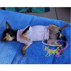 Artikel Nr-H70T92B-4__xs-hundepullover-fuer-kleine-hunde-und-welpen-in-der-farbe-rosa-mit-weissen-streifen-100%-baumwolle.