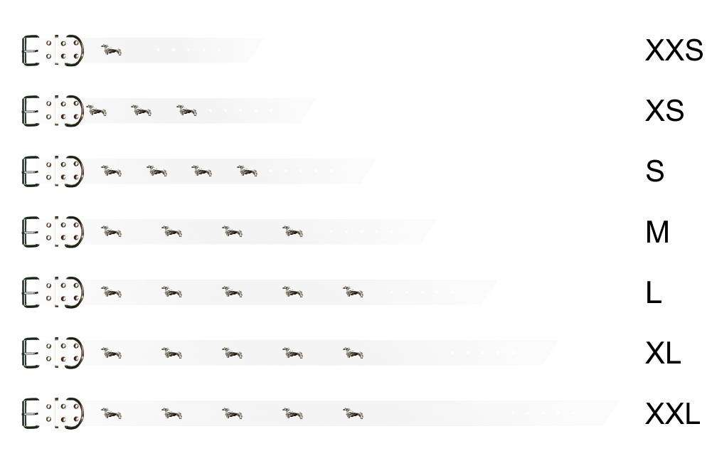 hunde-dackel-halsband-weiss-0-dackel-nieten