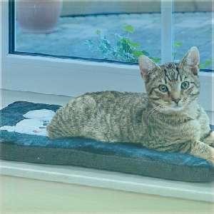 Katze-Betten-Körbe